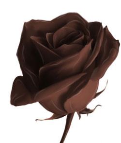Розочка из шоколада Sludginh