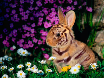 http://www.photoshop-master.ru/lessons/2007/270907/hair_tiger/7.jpg