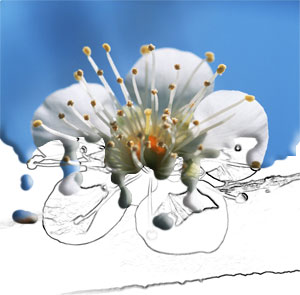 http://www.photoshop-master.ru/lessons/2008/300408/20.jpg