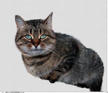 Фото для фотошопа кот