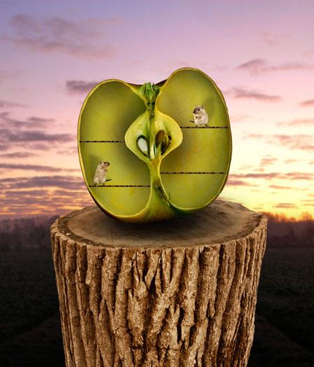 Домик из яблок картинка